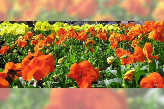 Blumenbeete brauchen einen Plan