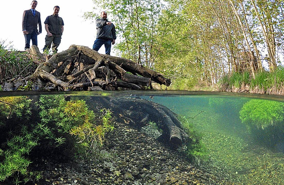 Unter und über dem Wasserspiegel des R... kanalisierten Grundwasserbaches auf.   | Foto: Paul Munzinger, Manfred frietsch