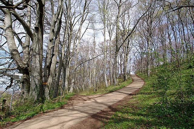 Wald als Erholungsraum und Wirtschaftsfaktor