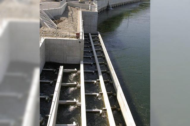 Für Rheinfische ist einiges im Fluss