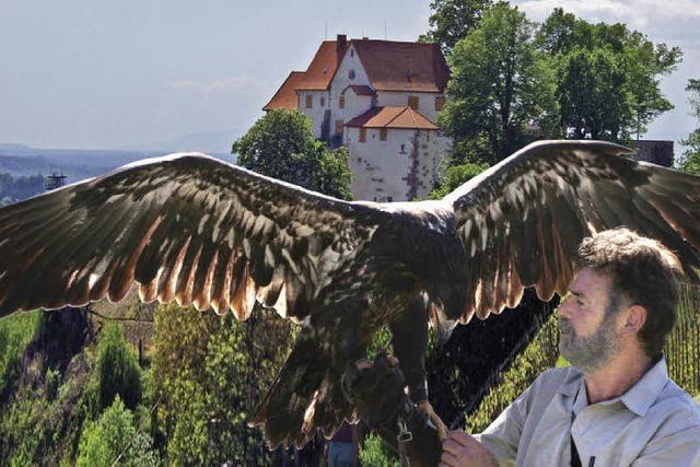 Einem Adler ins Auge schauen
