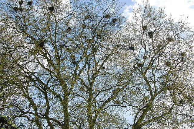 Die Krähen haben die Lufthoheit