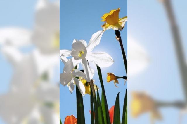 Wenn die Blumen blühen