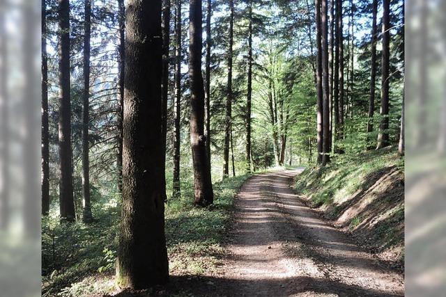 Klimawandel zwingt Waldbesitzer zum Umdenken