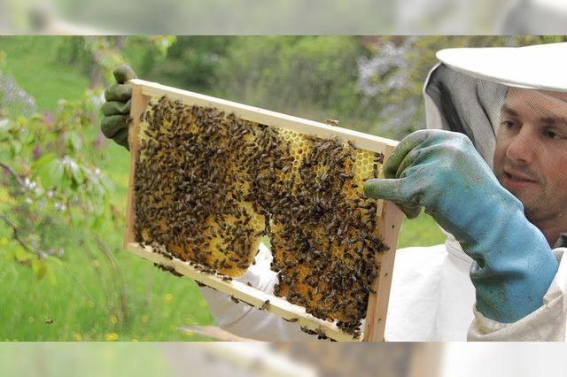 Bienenvölker aus dem Tal sind heiß begehrt