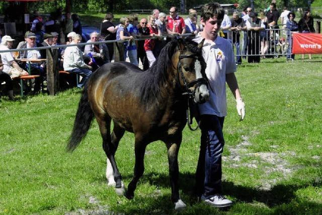 Große Schau: Pferde für alle Fälle