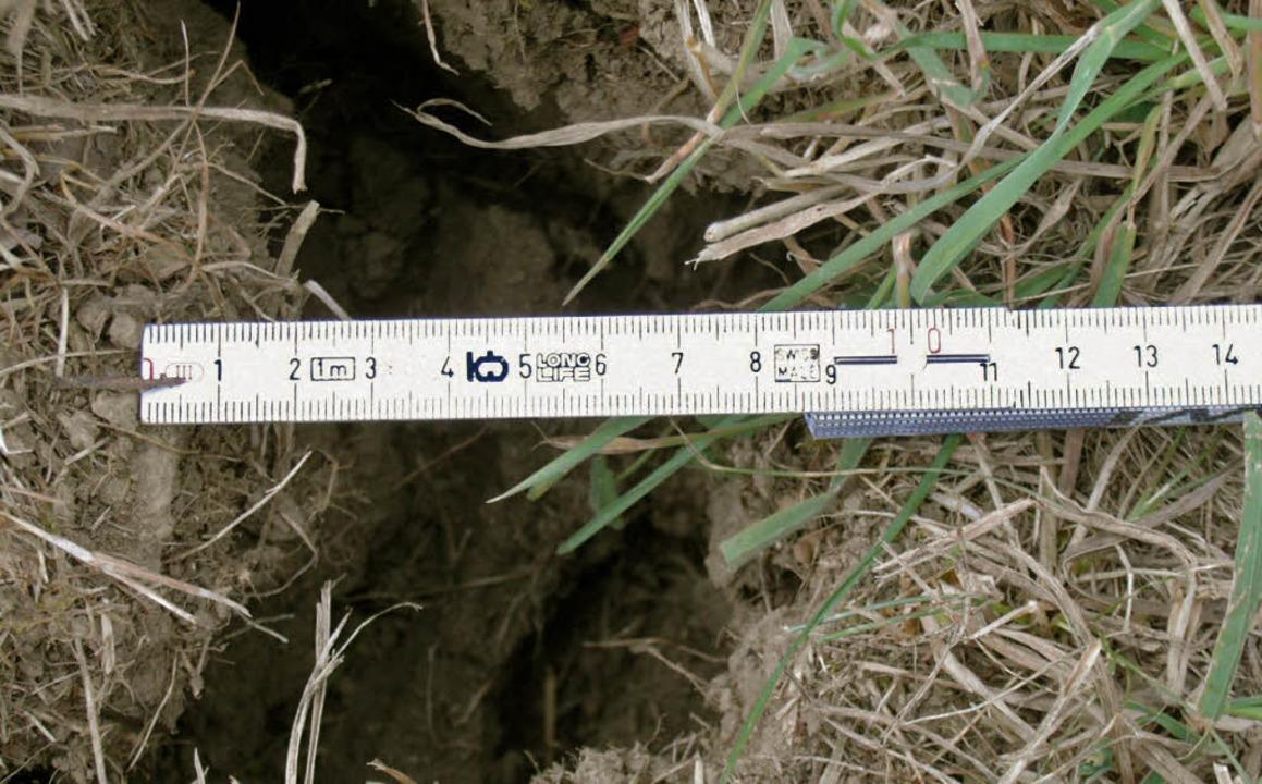 Eine Dürre wie im August des Jahrhunde... könnte in Schwörstadt erneut blühen.   | Foto: Helmut Kohler