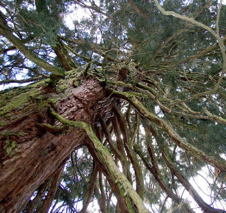 Die teils sehr alten Bäume werden nicht angetastet.    Foto: Nikolaus trenz
