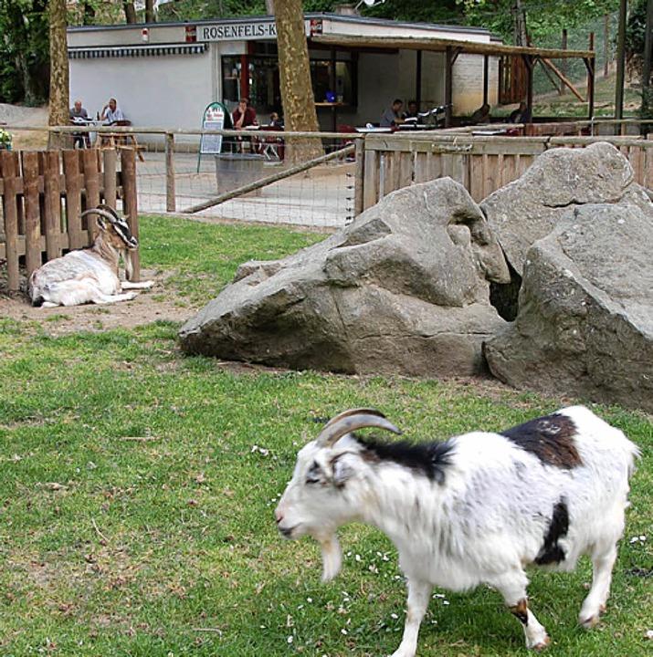 Rund um Tiergehege und Kiosk sind Ideen gefragt.    Foto: Nikolaus trenz