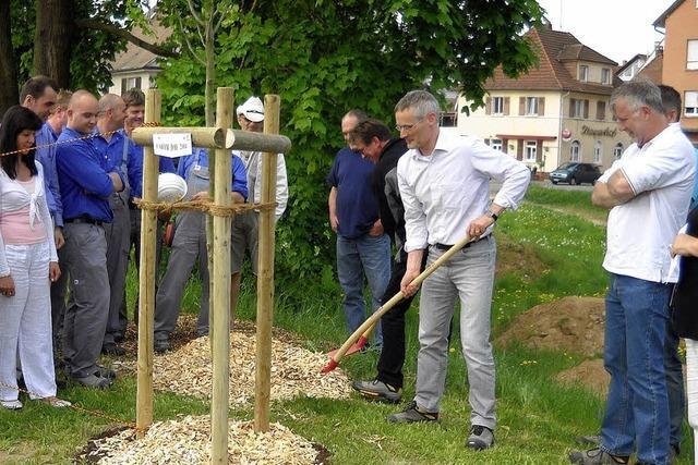 Zwei Bäume gepflanzt