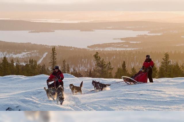 Husky-Safari in Finnisch-Lappland: Eiskaltes Vergnügen am Polarkreis