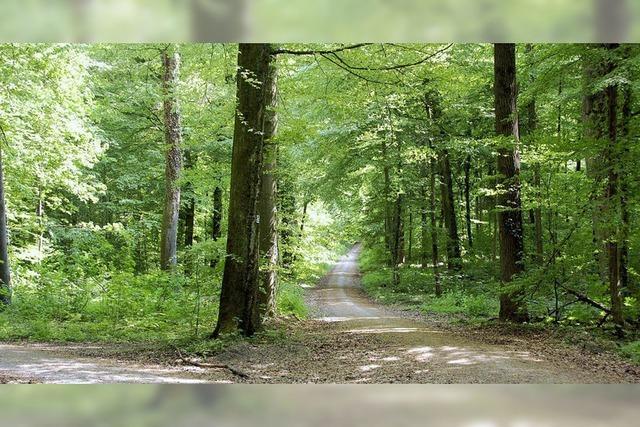 Wald zehrt noch vom Winter