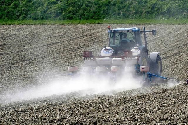 Die anhaltende Trockenheit gefährdet die Mais- und Kirschernte