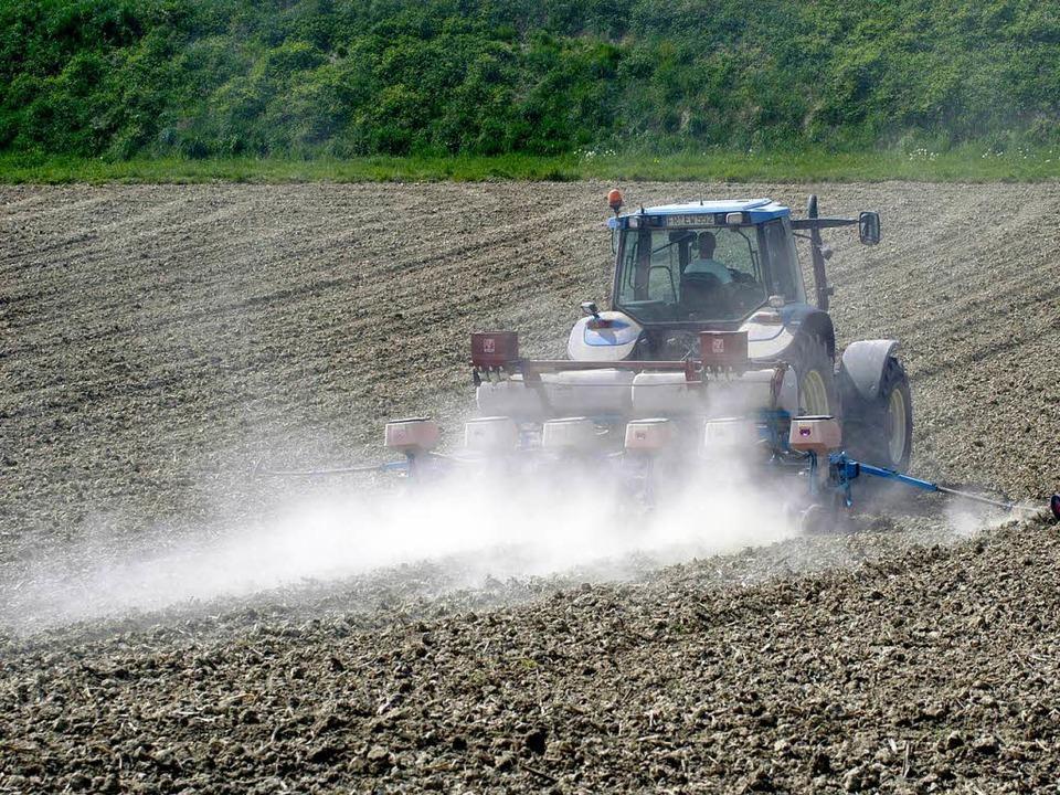 Die Landwirte in der Rheinebene haben ...er anhaltenden Trockenheit zu kämpfen.    Foto: Ingo Schneider