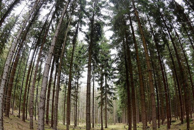 Gute Preise, aber zu wenig Wald