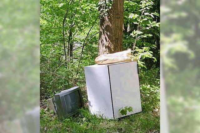 Umweltfrevel im Wald