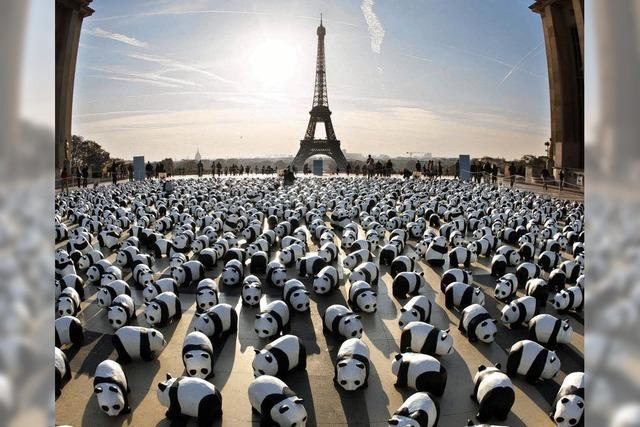 Vor 50 Jahren wurde die Umweltstiftung WWF gegründet
