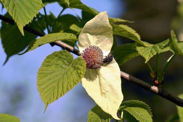 Weiße Flügel für die Blüten