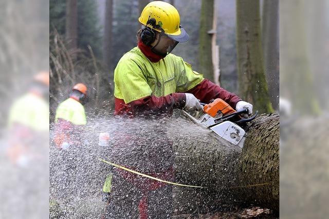 Forstbetriebe machen guten Umsatz