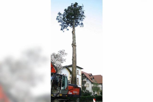 Baumgeschichte ade!