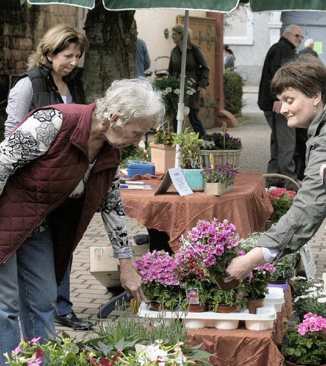 Der Frühling kam in Form von Blumen am Samstag in den Kippenheimer Rathaushof.   | Foto: sandra decoux-kone