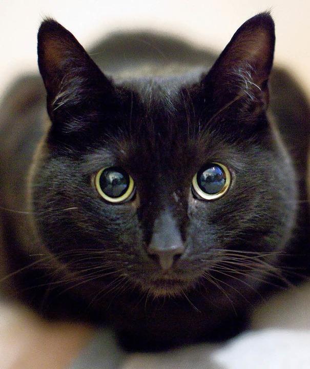 wie sehen katzen im dunkeln