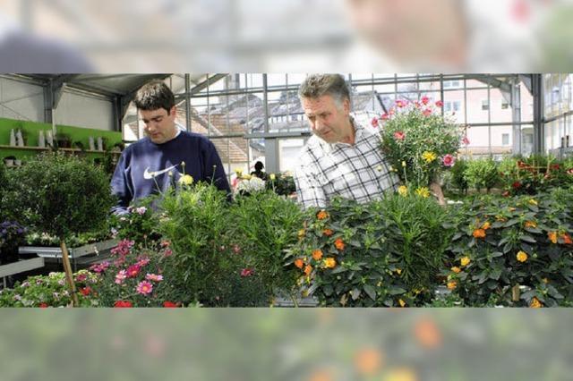Blütenpracht im neuen modernen Gewächshaus