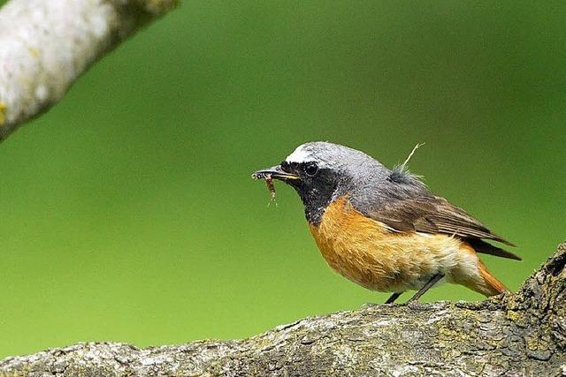 Zensus auch für die Gartenvögel