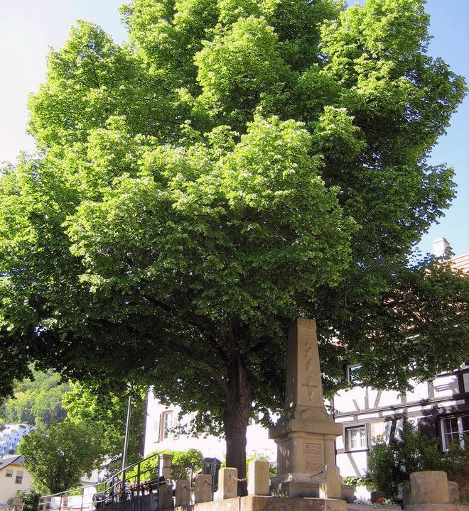 Auch die Linde am Kriegerdenkmal wird geschützt.   | Foto: Privat