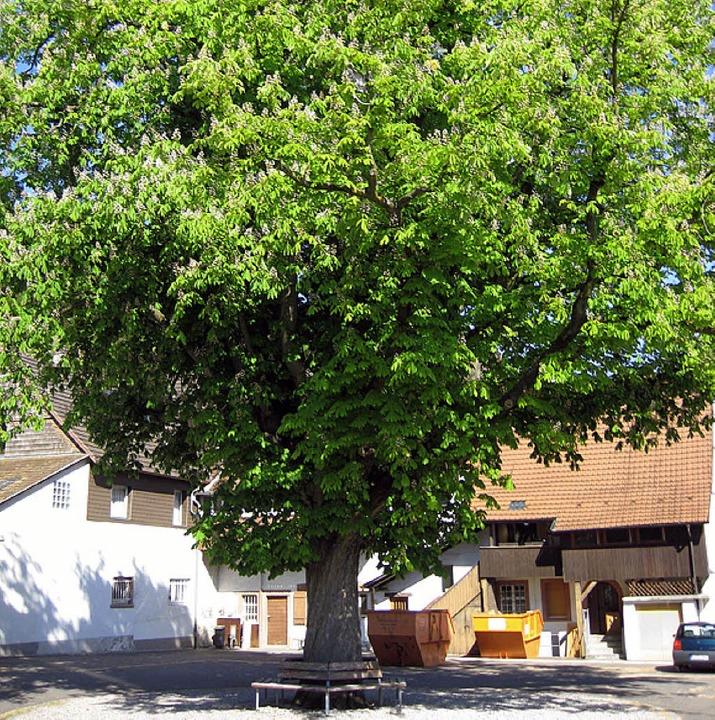 Kastanie am evangelischen Gemeindehaus Grenzach  | Foto: BZ