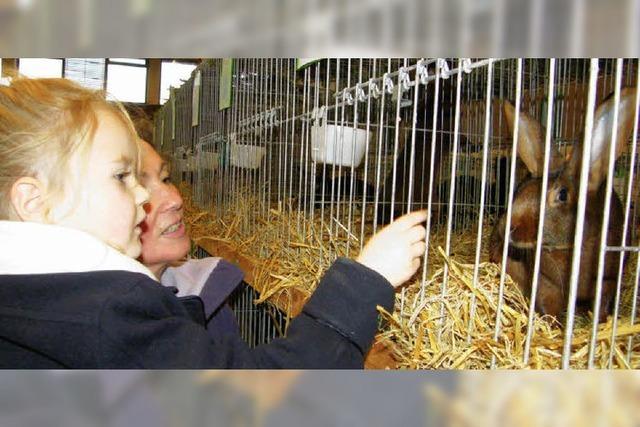 Kleintierzüchter in Kreis und Land erfolgreich