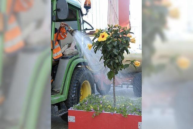 Stadtgärtner müssen kräftig gießen