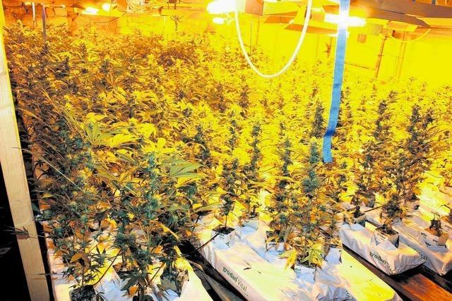 Sechs Jahre und neun Monate für Cannabisbauern