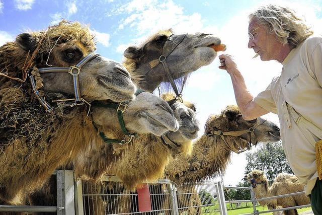 Locker vom Höcker: Kamelfest auf dem Mundenhof