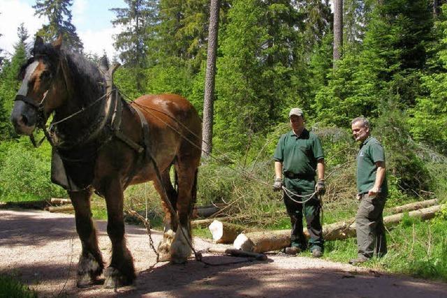 Pferde helfen bei der Durchforstung