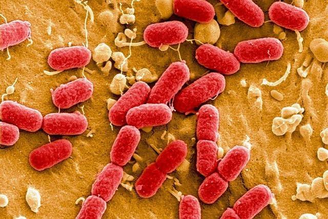 Deutschland: Zahl der Ehec-Infektionen steigt wieder rapide an