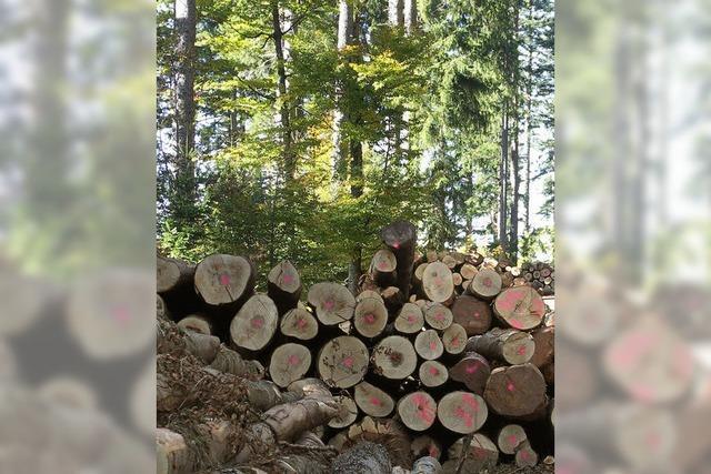 Rekordgewinn aus dem Stadtwald