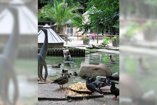 Verein sammelt Ideen für den Rosenfels-Park