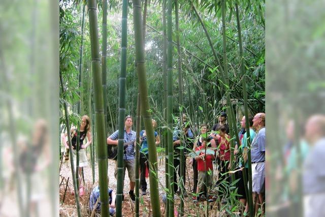 Tanz, Musik und Skulpturen im Bambuswald