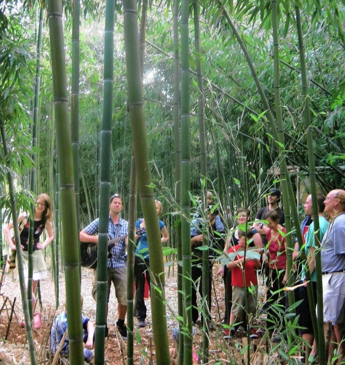 Der üppige Bambuswald in Mengen und di...werke lockten zahlreiche Besucher an.   | Foto: Anne freyer
