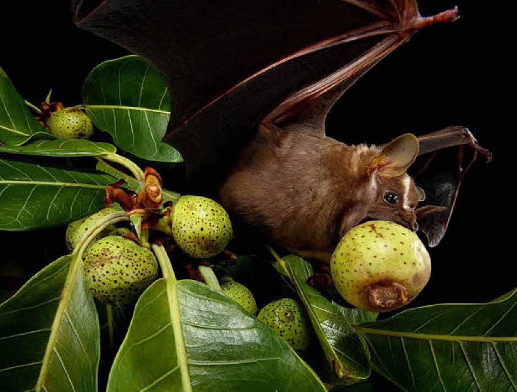 Schokoladen Fruchtzwerg Tier