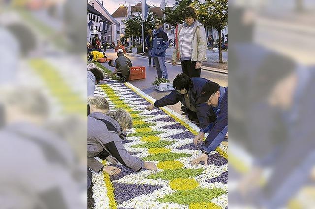 Kaum Hoffnung auf große Blumenteppiche