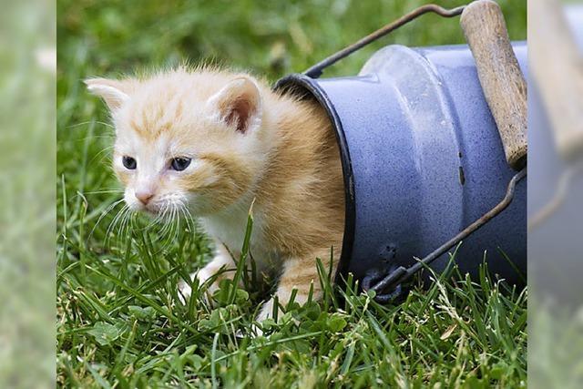 STADTBUMMLER: Catsitting, catshitting