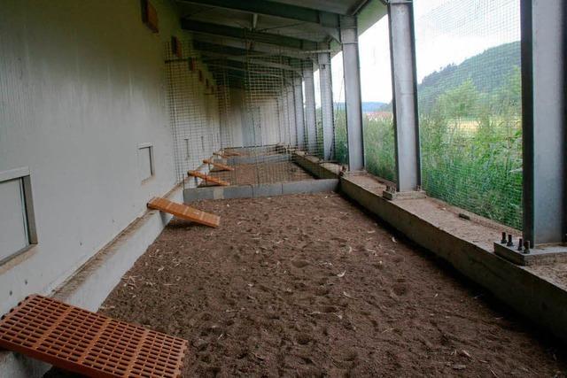 Virus: Junge Ente legt Geflügelhof bei Schopfheim lahm