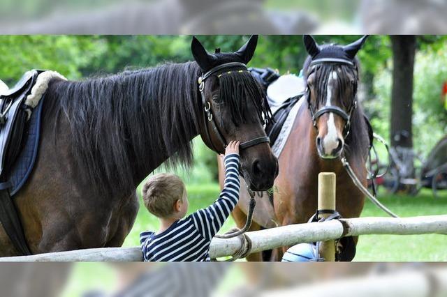 Edle Pferde, flotte Gespanne