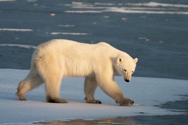 Klimaverhandlungen: Wie kann man die Erderwärmung stoppen?