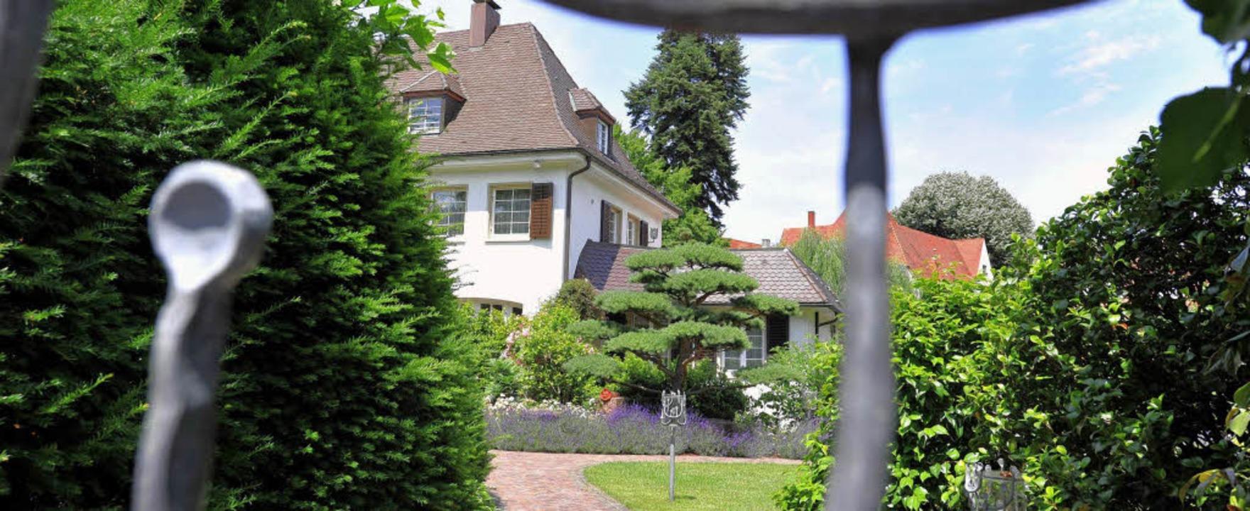 Durch den Zaun gesehen: Eine alte  Vil...ehre, deren Bestand  in Gefahr gerät.   | Foto: Rita Eggstein