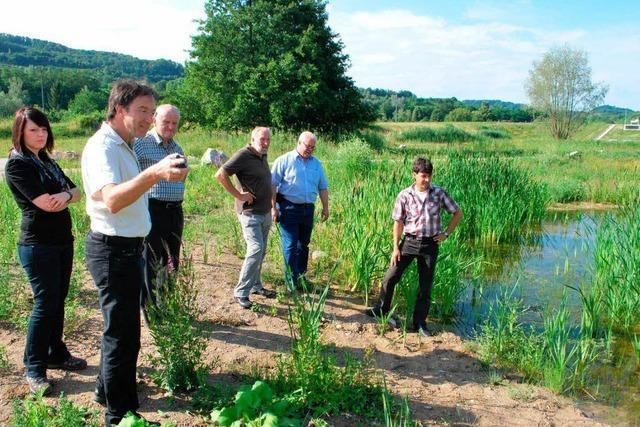 Natur hat vom Umbau des Regenrückhaltebeckens in Oberrotweil profitiert