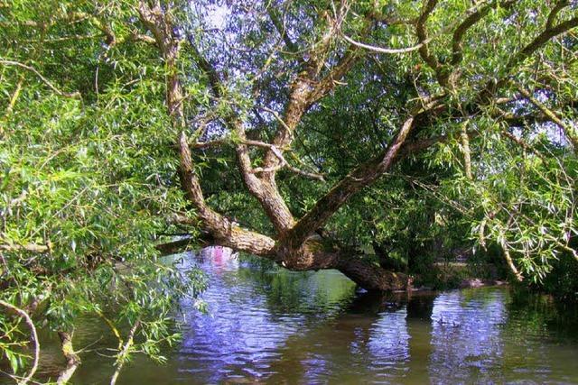 Umgestürzte Bäume behindern freies Fließen der Elz