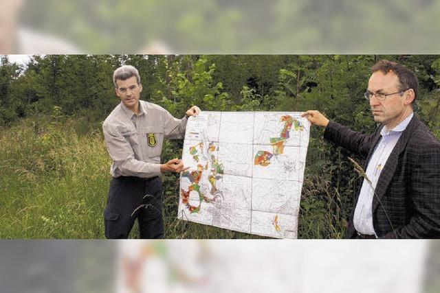 Experten halten ein Plädoyer für den Mischwald